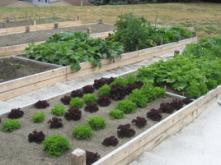 grace community garden